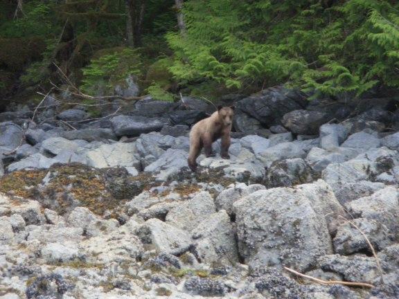 AlaskaD27FrostyBay 009