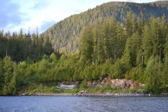 Old logging site in Yeo Cove