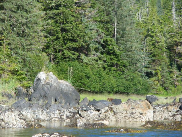 Grizzly from the Kayak!